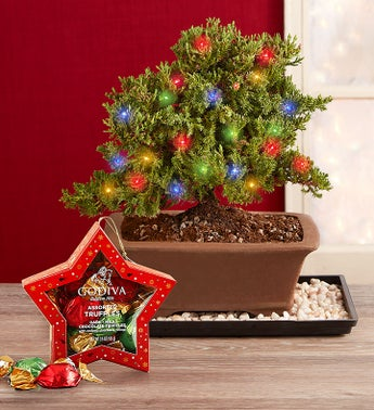 Merry Christmas Bonsai  Free Candle