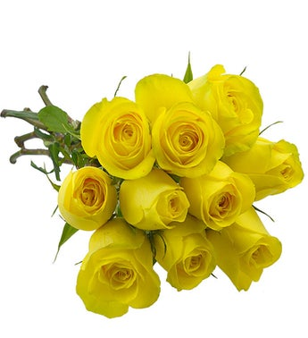 10 Yellow Colombian roses